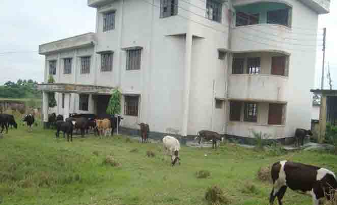 Barisal duck breeding farm turns to cattle grazing ground as the structures