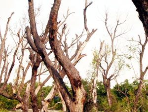 কুয়াকাটা সংরক্ষিত বনাঞ্চল