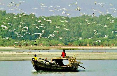 monpura-birds-otithi-pakhi