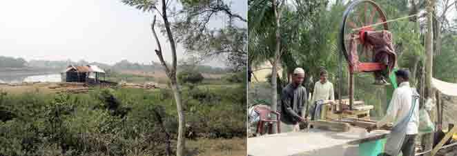 অবৈধ করাতকলে চোরাই গাছ: বনাঞ্চল উজার