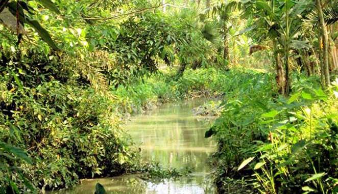 রাজাপুরের পোনা নদী এখন মরা খাল, খনন জরুরি