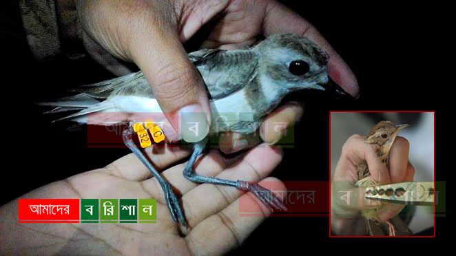 Six day long waterbird ringing camp in coast area
