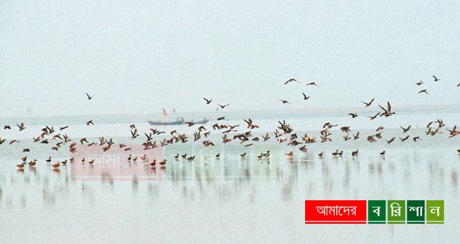 char-kukri-mukri-bird-bhola-tourism-bangladesh চর কুকরী মুকরী ভোলা পর্যটন বরিশাল কুকরি মুকরি
