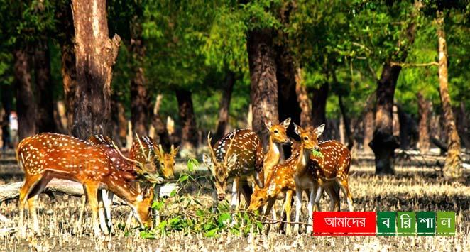 char-kukri-mukri-deer-horin চর কুকরী মুকরী ভোলা পর্যটন বরিশাল কুকরি মুকরি