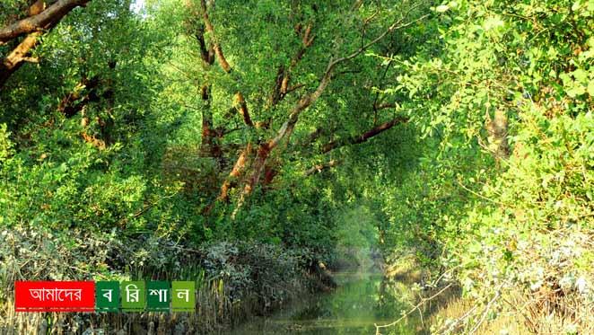 char-kukri-mukri-iside-mangrove-forest চর কুকরী মুকরী ভোলা পর্যটন বরিশাল কুকরি মুকরি
