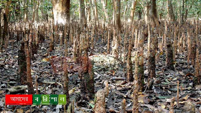 char-kukri-mukri-mangrove-forest চর কুকরী মুকরী ভোলা পর্যটন বরিশাল কুকরি মুকরি