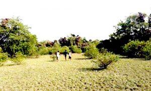 দক্ষিণের অন্যতম দর্শনীয় হতে পারে ছইলার চর