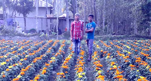 দুই ভাইয়ের চাষের 'ফুল' যাচ্ছে গোটা দক্ষিণাঞ্চলে